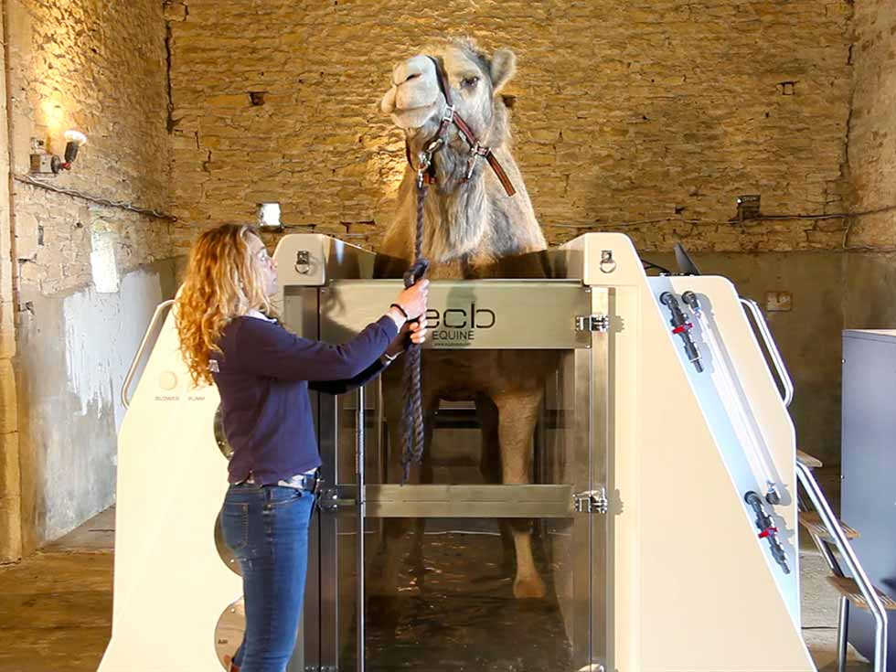 Equine Therapy NORCO Composites & GRP